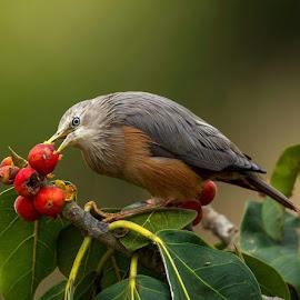 by Mantosh Kumar - Animals Birds