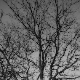 Trees by Nikol Cvetković - Nature Up Close Trees & Bushes ( nature, black and white, trees, bnw, photography )