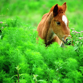 Spring Baby by Debby  Raskin - Animals Horses ( spring green, colt, horse )