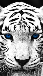 White Tiger Live Wallpaper - screenshot