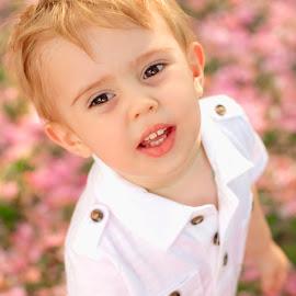 Playing in the Cherry Trees by Krystal Ferington-Timozek - Babies & Children Child Portraits ( toddler boy, little boy, white, pink, toddler, garden, boy, cherry blossoms )