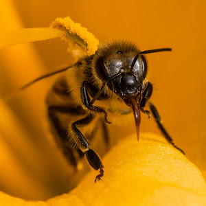 Bee 6551.jpg