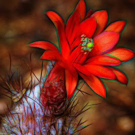 Cactus Flower by Dave Lipchen - Digital Art Things ( cactus flower )