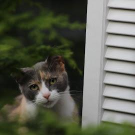 Princess by Sarah Maria Bagay - Animals - Cats Portraits