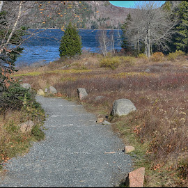Acadia National Park  by Lorraine D.  Heaney - City,  Street & Park  Vistas