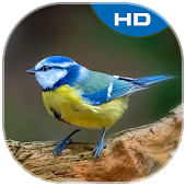 Birds Theme and Launcher APK for Bluestacks