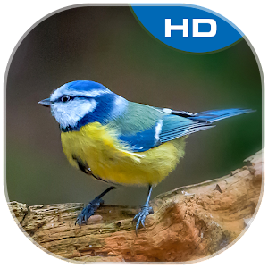 Download Birds Theme and Launcher For PC Windows and Mac