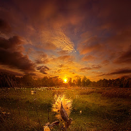 Where Ever Life Takes Us by Phil Koch - Landscapes Sunsets & Sunrises ( canon, wisconsin, vertical, joy, yellow, landscape, sun, photography, love, sky, nature, dramatic, horizons, light, inspired, clouds, office, trending, green, beautiful, twilight, art, horizon, scenic, morning, portrait, field, environment, dawn, season, unity, blue, sunset, serene, popular, peace, meadow, earth, natural, hope, inspirational,  )
