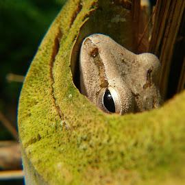 Frog by Eko Waluyo - Instagram & Mobile Android ( macro, frog, close up, macro shot, photography )