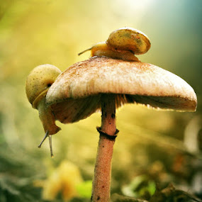 Two Little Companion by Alit  Apriyana - Nature Up Close Mushrooms & Fungi