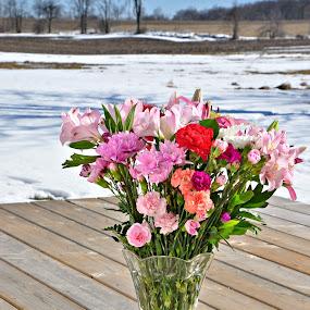 Valentine's Flowers by Debbie Johnson MacArthur - Flowers Flower Arangements
