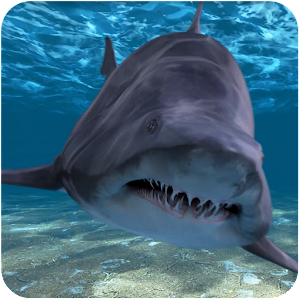 Shark Attack Live Wallpaper For PC / Windows 7/8/10 / Mac – Free Download