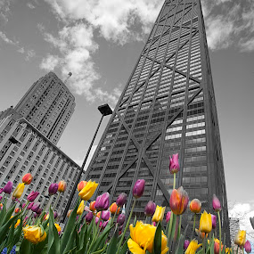 John and tulips by Cristobal Garciaferro Rubio - Buildings & Architecture Public & Historical ( tulip, tulips, chicago, john hancock, city )