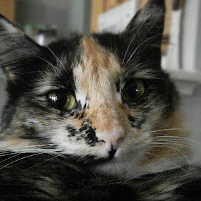 by Alyssa Michlin - Animals - Cats Portraits