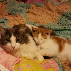 Big brother by Kerrie Bosson - Animals - Cats Kittens ( big brother, cuddles, family, annoying, sleeping )