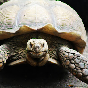 Friendly Turtle by Mallory Walsh-Ruggiero - Animals Other
