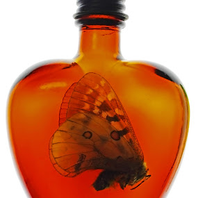by Eric Hanson - Artistic Objects Other Objects ( moth bottle fly vintage white orange )