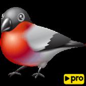 Download Bird Center: Learn Birds PRO APK on PC