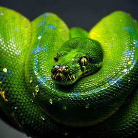 Slitherin by Sarah Hauck - Animals Reptiles ( snake, water drops, scales, blue, green, snakeskin, skin )