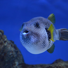 by M & D Photography - Animals Fish