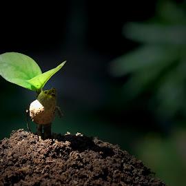 bud by Adjie Tjokrosoedarmo - Nature Up Close Gardens & Produce