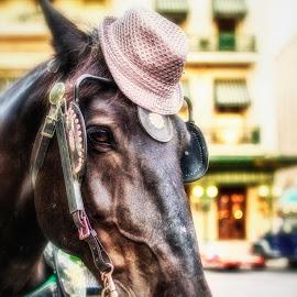 Ole Sadey by Paul Frese - Animals Horses ( alamo, texas, horse, funny, san antonio, bonnet, cute, hat )