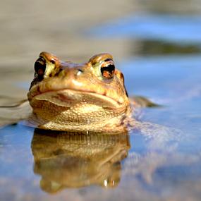 the frog prince by Dasa Augustinova - Uncategorized All Uncategorized