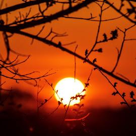 sunrise behind budding branches by Jason Lockhart - Landscapes Sunsets & Sunrises ( wisconsin, brances, sunrise, orange sky, buds, jefferson county )
