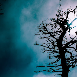 Treetop by Gayatri Prakash - Digital Art Abstract ( eerie, tree tops, blue sky, blue, tree, epic, scary,  )