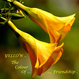 YELLOW by SANGEETA MENA  - Typography Quotes & Sentences