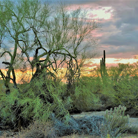 She Dreams in Colors by Misty Mcnaughton - Landscapes Deserts ( desert, colorful, trees, brush, cactus )
