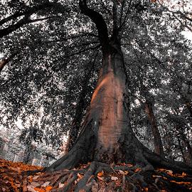 autumn by Stefania Loriga - Nature Up Close Trees & Bushes (  )