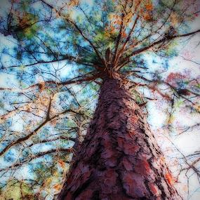 Longleaf  by John Ireland - Nature Up Close Trees & Bushes