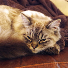 My Spot by Ingrid Anderson-Riley - Animals - Cats Kittens (  )