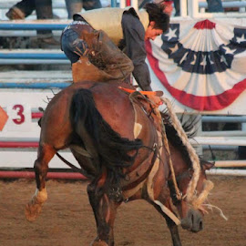 Cowboy Up  by Jeanene Leonard Galewaler - Sports & Fitness Other Sports ( horse, cowboy, bucking, hat, rodeo )