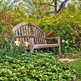 Bench by Don Webb - City,  Street & Park  City Parks ( bench, park, grass, flowers )