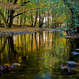 by Siniša Almaši - Nature Up Close Water ( water, up close, natural light, reflection, nature, trees, forest, view, stones, landscape, depth, river )