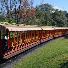 Walt Disney World Train by Keith Heinly - Transportation Trains ( january, florida, orlando, train, disney )