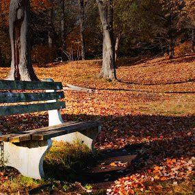 Bench Fall by Ken Quiñones Street - City,  Street & Park  City Parks