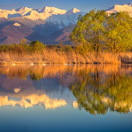 Mirror by Iulian Astilean - Landscapes Waterscapes ( swans, reflection, mountain, tree, waterscape, colors, snow, landscape )