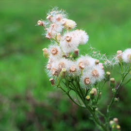 Blown by the wind by Cristina Nunes - Nature Up Close Other plants (  )