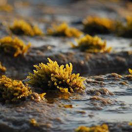 by Simona Serdiuc - Nature Up Close Sand ( seashore, seascapes, sea, rock, beach, seaside, seascape, stones, rocks, coast )