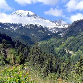 Mount Rainier National Park by Dawn Hoehn Hagler - Landscapes Mountains & Hills ( washington, national park, mountain, mount rainier national park, mount rainier )