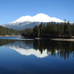 Reflecting Siskiyou and Shasta by Sherry Gardner - Landscapes Waterscapes ( camping, mt shasta, fishing, siskiyou lake, hiking )