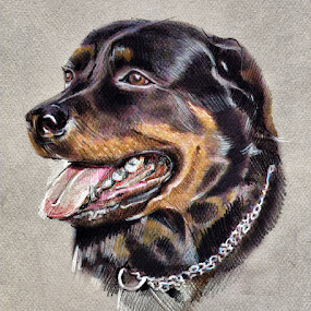 The best smile by Daliana Pacuraru - Drawing All Drawing ( pastel, animals, daliana pacuraru, smile, dog, drawing, pencils,  )