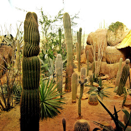 all kinds of cactuses by Redski Pictures - Landscapes Deserts ( sand, desert, nature, plants, cactuses )