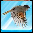 Cuckoo Escape