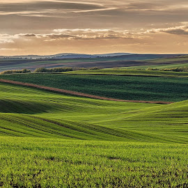 colored waves by Josef Hasík - Landscapes Prairies, Meadows & Fields ( sky, green, waves, trees, brown, landscape )