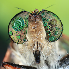UNTITLED 04 by Satriyo Andoyo - Animals Insects & Spiders ( macro )