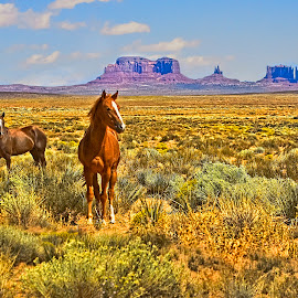 Monument Valley Lanscape by Sandy Friedkin - Landscapes Prairies, Meadows & Fields ( two horses, monument vallley, utah, landscape, prairie,  )